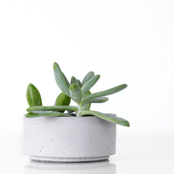 Világosszürke beton dizájn ültetőtálka pozsgásoknak.